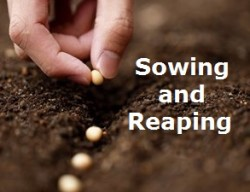 sowing23
